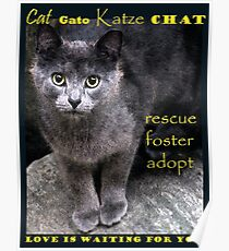 Rescue, Foster, Adopt Poster