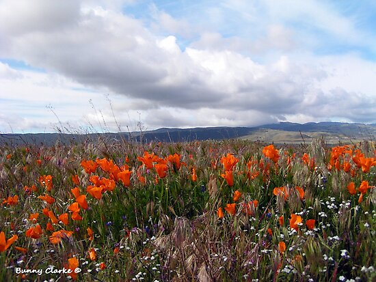Antelope Valley California Poppy Reserve (5144 views as of 11022017) by Bunny Clarke