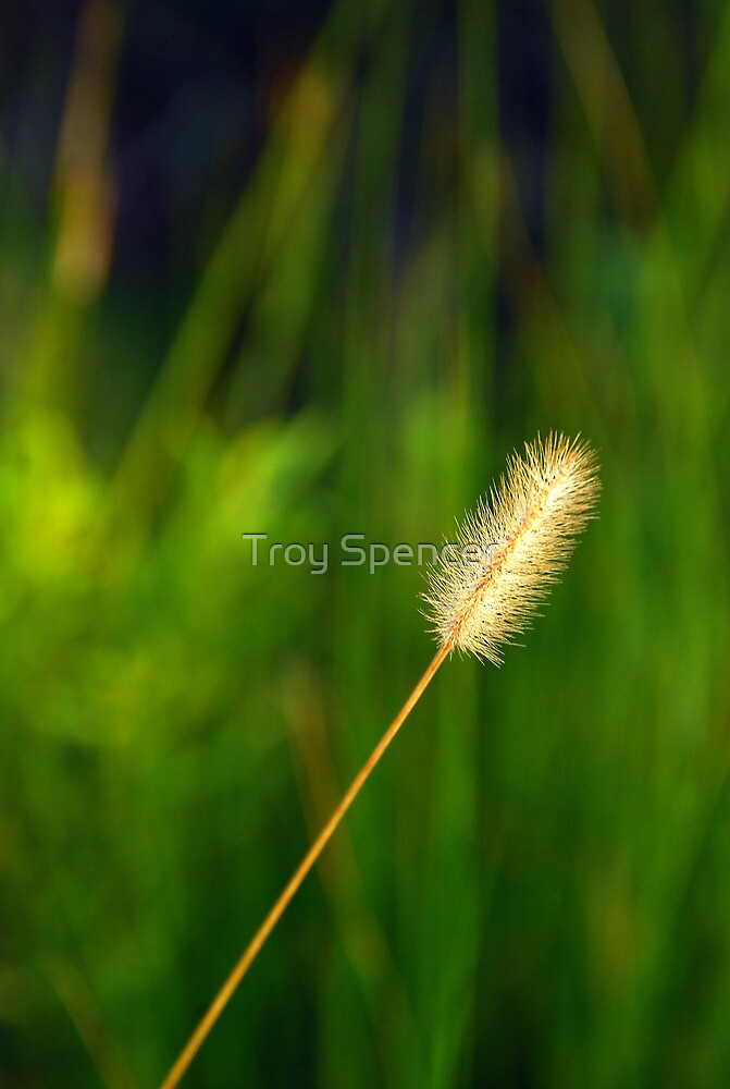 golden rod, tall by Troy Spencer
