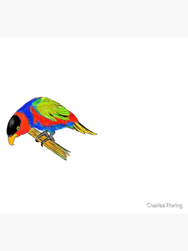 Black-capped Lory by leororing