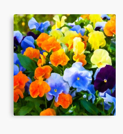 Painted Pansies Canvas Print