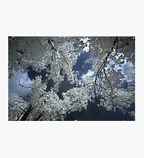 Infrared trees Photographic Print