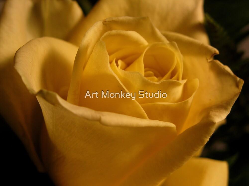 Yellow Rose by Dan Perez
