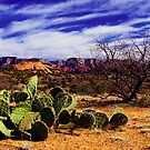 Cactus 1 by AndyReeve