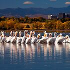 Pelicans In My Town by Valentina Gatewood