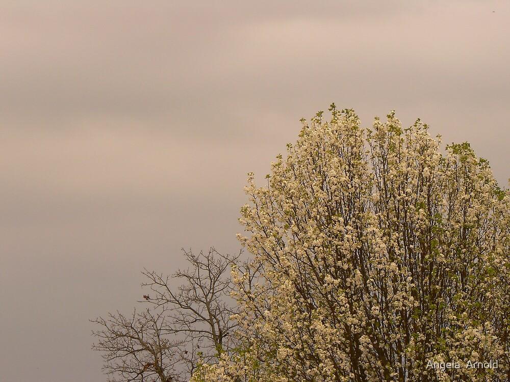 spring cometh by Angela  Arnold