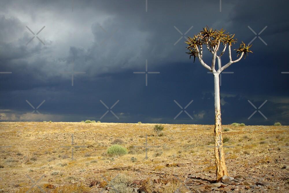 Kokerboom by Adrianne Yzerman