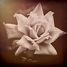 Rose #1 by Bette Devine
