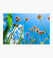 Abstract view of flowers on lovely blue cloudy sky background. Photographic Print