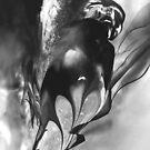 Tangara Firebirde by Françoise  Dugourd-Caput
