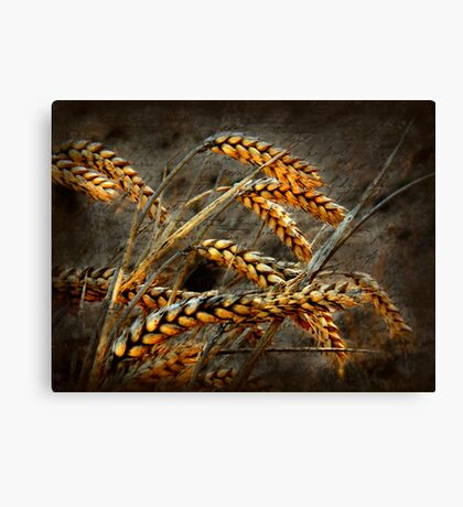 Simple Life.. Canvas Print