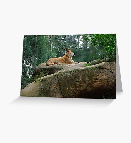 king dingo Greeting Card