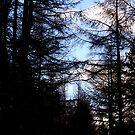 Forest by Kacholek