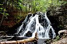 St. Paddy's Falls by Kathleen Daley