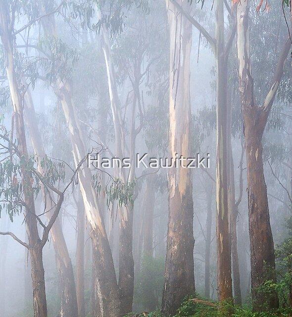 0529 Ghostly Gum trees - Beechworth by Hans Kawitzki