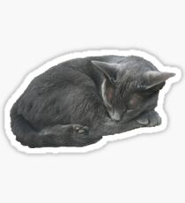 Grey Cat Sleeping Sticker