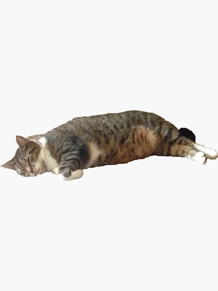 Striped Fat Tabby Cat Sleeping by abbylynch28