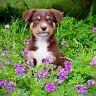 Flower pup-ower by Penny Kittel