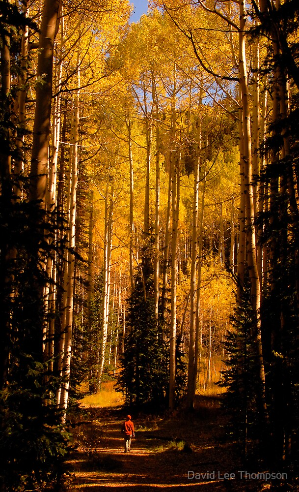 """Walking in Aspens"" by David Lee Thompson"