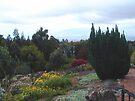 Gardens at Kula Lodge by Cathy Jones