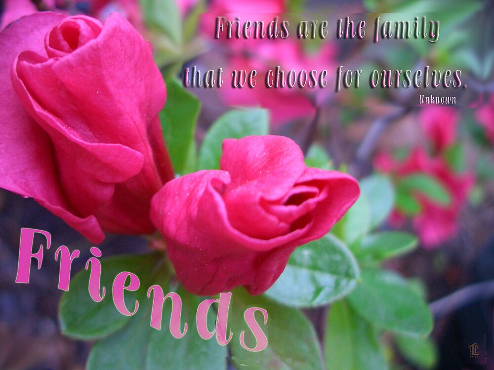 Friends card by TLCGraphics