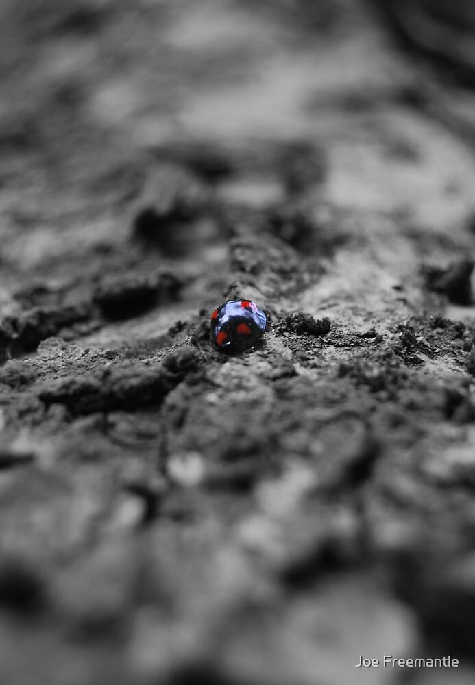 ladybird by Joe Freemantle