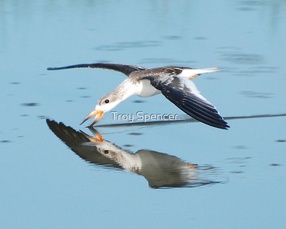 skimming skimmer by Troy Spencer