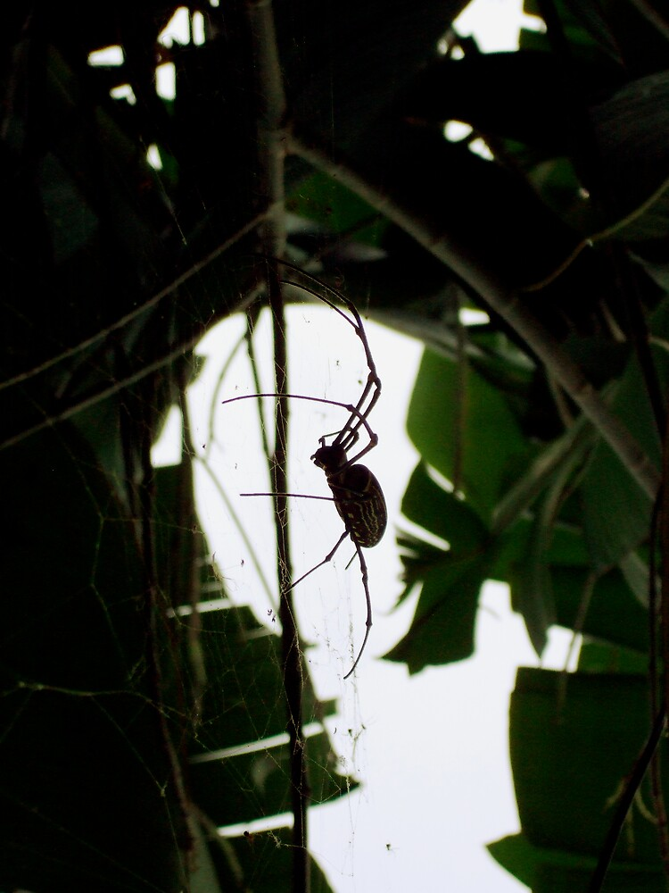 Big spider by Neil Cain