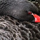 Black Swan by Rebecca Cruz