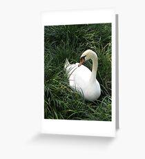 White Swan Greeting Card