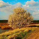 Blossom by Will Kemp