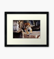 tiger, cat, sebirian tiger Framed Print
