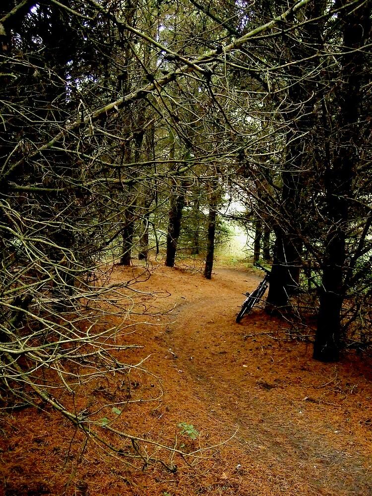 Thetford Winter Singletrack by Neil Cain
