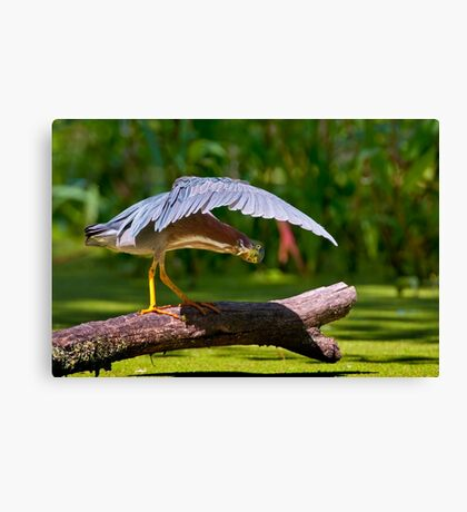 Oh There You Are ! Canvas Print