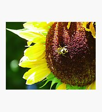 BC Sunflower Photographic Print