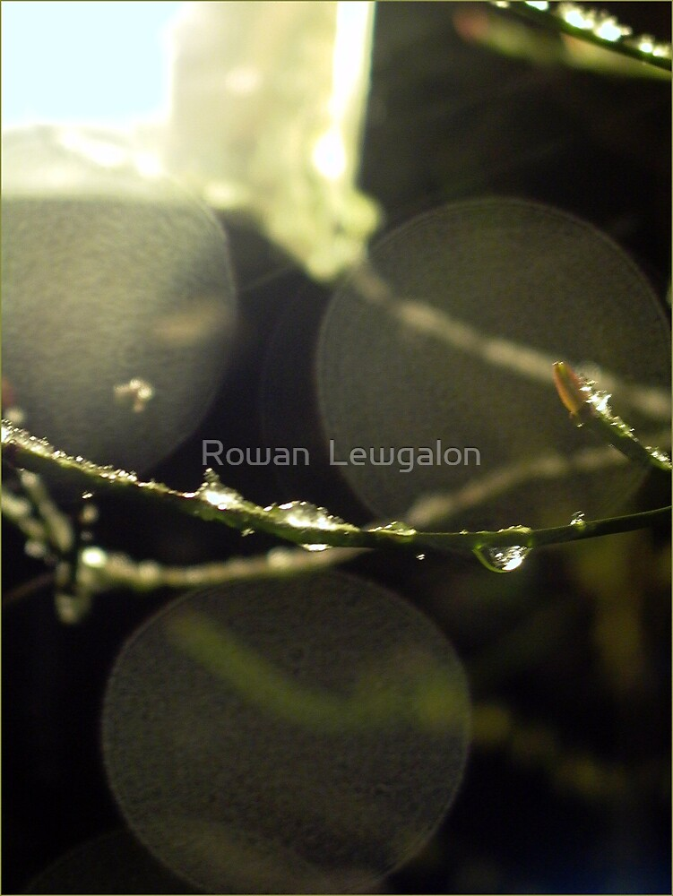 Late Snow by Rowan  Lewgalon