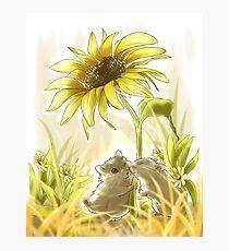 Sunlight Hamsters Photographic Print