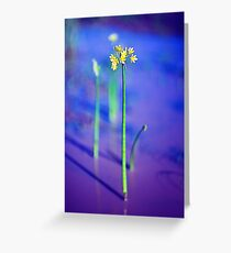 Outback Flower Greeting Card