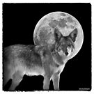 Coyote Moon by Peter B