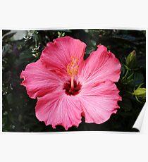 Five Pink Petals Poster