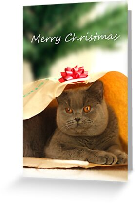 Cat christmas card greeting cards by sweetkoala redbubble cat christmas card m4hsunfo
