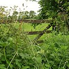 Field Gateway  by lezvee