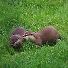 Otter Pair by lezvee