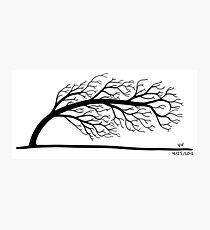 Windblown Tree Photographic Print