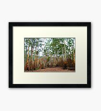 Survivors - Mount Buller National Park, Victoria Australia Framed Print