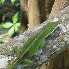 Green Lizard by Rebekah  McLeod