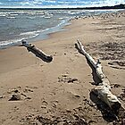 Driftwood Logs at Nickel Plate Beach by Billlee