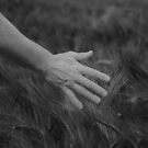 A hand through wheat by Ajmdc