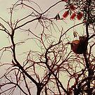 tree 5664 by MAGDALENE CARMEN