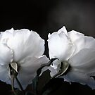 Touched by a Rose by Lozzar Flowers & Art